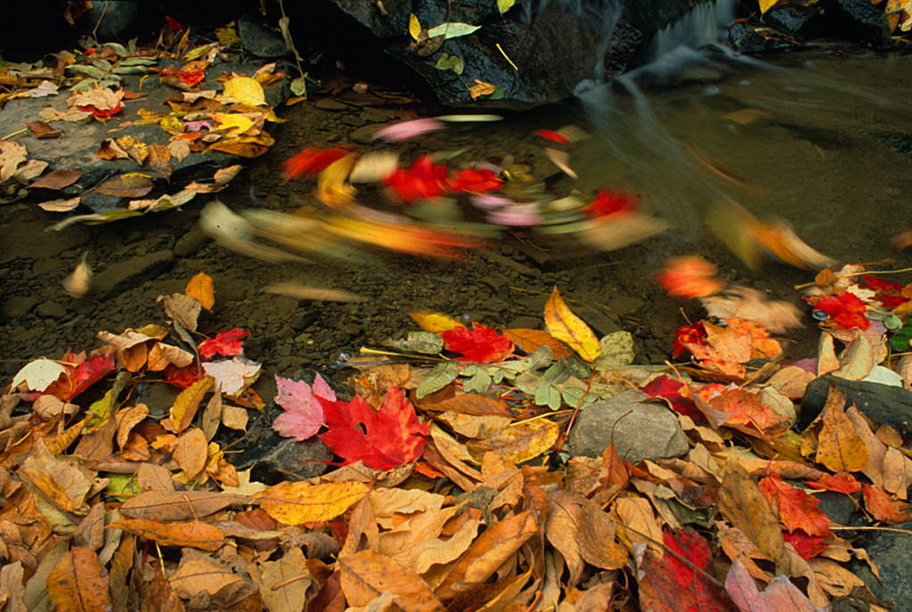 How To Photograph Fabulous Fall Leaves